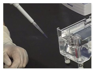 Cellular & Molecular Biology - Preparation of the Agarose Gel