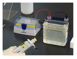 Cellular & Molecular Biology - SDS-Page Gel Preparation